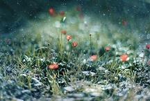 beauty... / by Maarje .