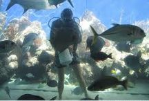 st thomas attractions / Get attracted to the St. Thomas attractions at Coral World Ocean Park