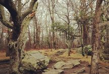 Appalachian Trail / Where I'm going to go someday / by Rainey Miller