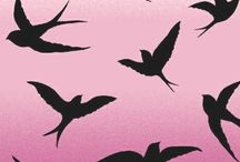 hirondelles oiseaux