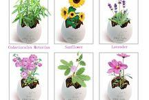 Mini plants / Fearie garden