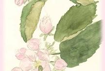 OTMA drawings&paintings