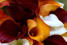 Seasonal: Fall / Inspiration for fall bouquets, table decor, bridesmaids dresses and more!