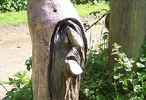 hout / hout