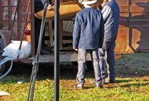 The Amish Way of Life