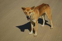 Desert animals / Billie Bowbrick, class 7J