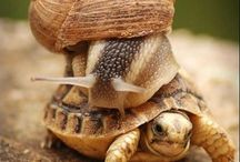 photo d'un escargot sur une tortue