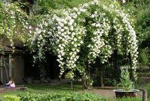 Blumen / Garten