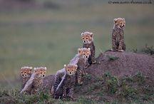 Wild Life / Wild Life Photography