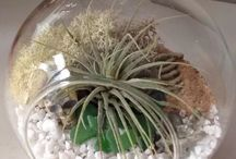 Your airplants at home / A board featuring the beautiful terrariums created by customers of The Skygardens