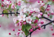 Ideias para fotos de primavera