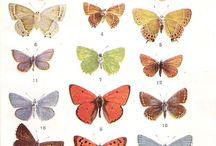 Secret Butterflies
