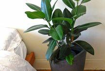 10 Erfrischende Möglichkeiten, Um Ihr Haus Geruch Wie Frühling