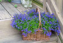 plantes et fleurs