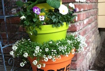 For the Garden / by Katie Gonano