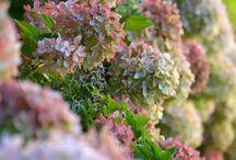 Octobre - Des fleurs, une saison