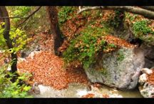 A glance of our beautiful #Steni in #Evia during fall! / http://youtu.be/2AA88zg_EwY