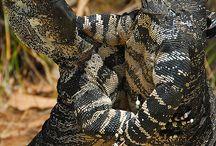 Fauna - Рептилии