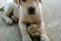 Kutya - Dog