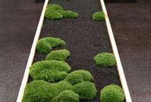 jing jang, zenova zahradka