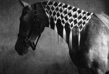 Horses  / by Sue Mullen Amirault