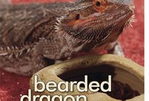 Bearded Dragons / by Misty Ice