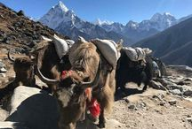 Everest Base camp trekking kathmandu Nepal.