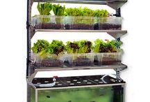 plant future