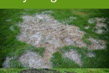Repairing dog urine from grass