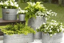 Stylish and structured container gardens