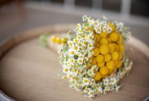 Small Bouquets / I have a soft spot for miniature bouquets, especially those featuring wildflowers. Here are a few of my favorites.