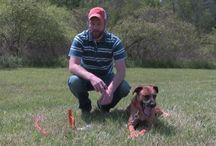 Dog Stake Out and Check Cords / Dog Stake Out and Check Cords from Lion Country Supply. / by Lion Country Supply
