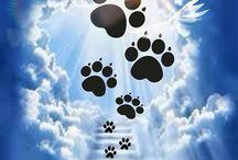 Pet Memories