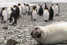 Animal Photo Bombs! / by Critter Control