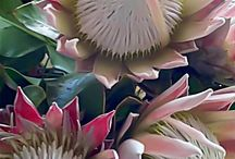 proteas and other art