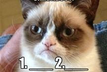 GRUMPY CAT  / FUUNY CAT