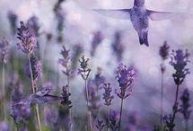 Birds... / by Marie Wilfinger