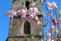 Cross Gardens - Mitcheldean / The Cross Gardens in Mitcheldean and their lovely flowers tended to by Mitcheldean Gardening Club - June 2015