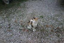 kedi hayranı