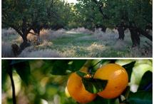 Farmstay / Farm Vacations