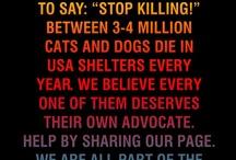 Stop killing!!!