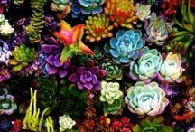 Garden Delights-Succulent Sweets&Cacti Cuties / Succulents and Cactus / by Sassafras