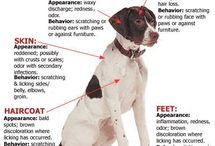 About a dog / A dog wether healthy or not
