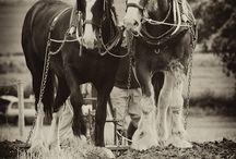 Love the horses! / by Chocolate Horse Farm Gypsy Vanner Horses