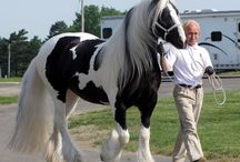 Horses :) / Horses