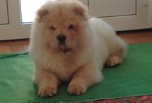 Puppy / animalute