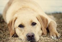 Dogs & Cats and other cute animals / Love