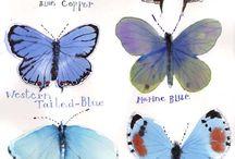 BUTTERFLlES / Butterflies