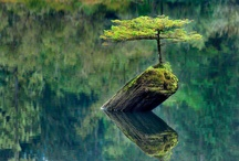 Naturelovers / by Theresa Tregaskis