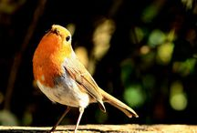 Friend - Louie Robin / Son of the famous Larry and doing well - I photograph him every day!